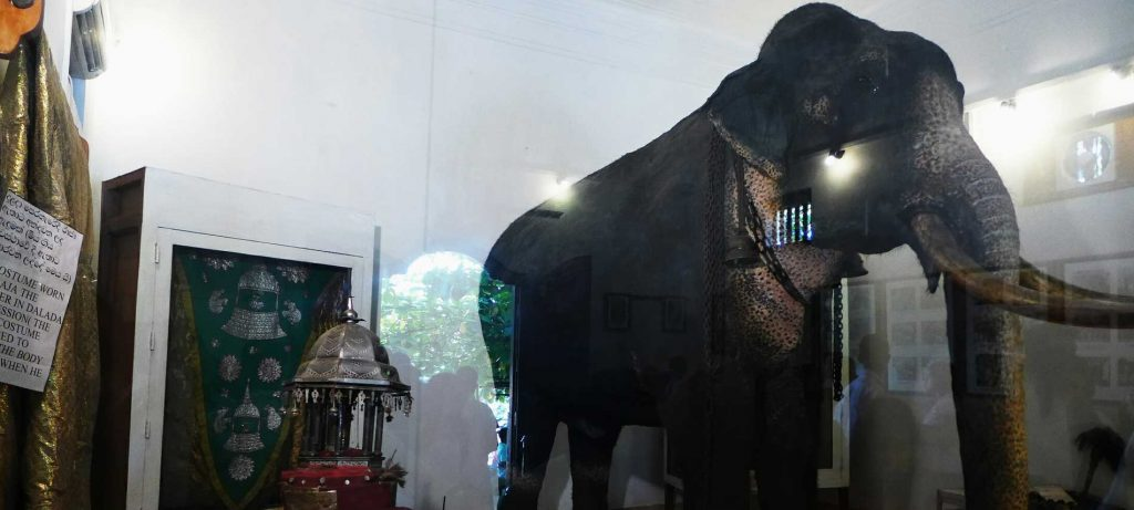 Kandy museum of raja elephant