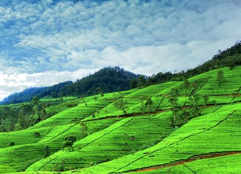 Nuwaraeliya