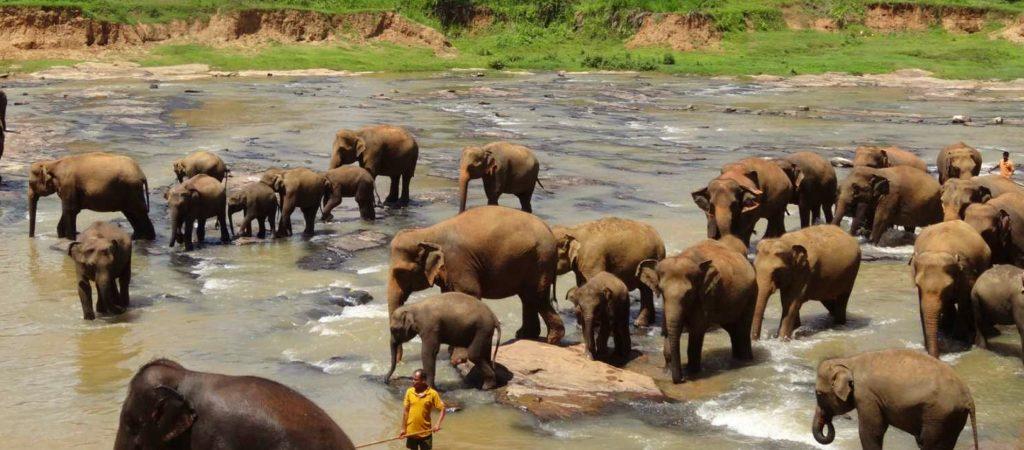 Elephant Orphanage Pinnawala